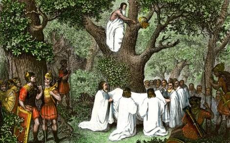 mistletoe-gathering