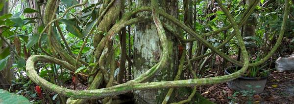 ayahuasca2.png